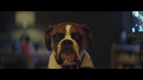 buster-the-boxer-john-lewis-christmas-1